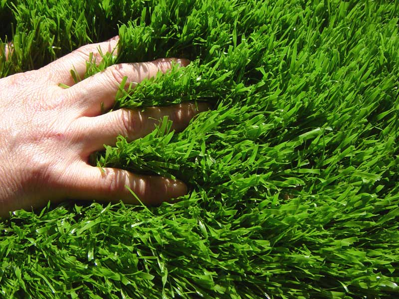 Gazon semer for Quand semer une pelouse