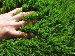 belle pelouse verte