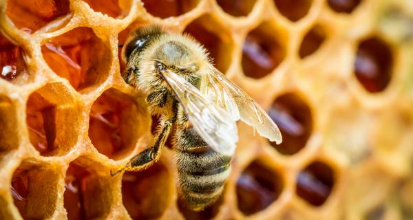 Trois conseils pour aménager un jardin favorable aux pollinisateurs
