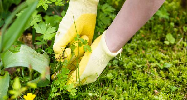 Sept astuces pour tuer les mauvaises herbes