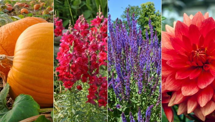 Tendances horticoles 2019 : Les plantes gagnantes