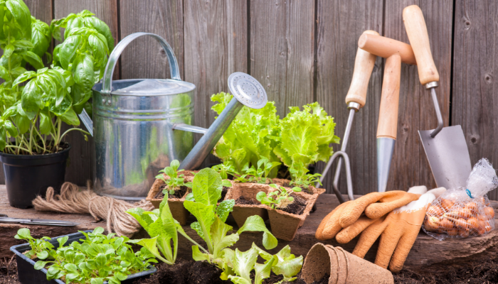 Calendrier de semis de légumes et de fines herbes
