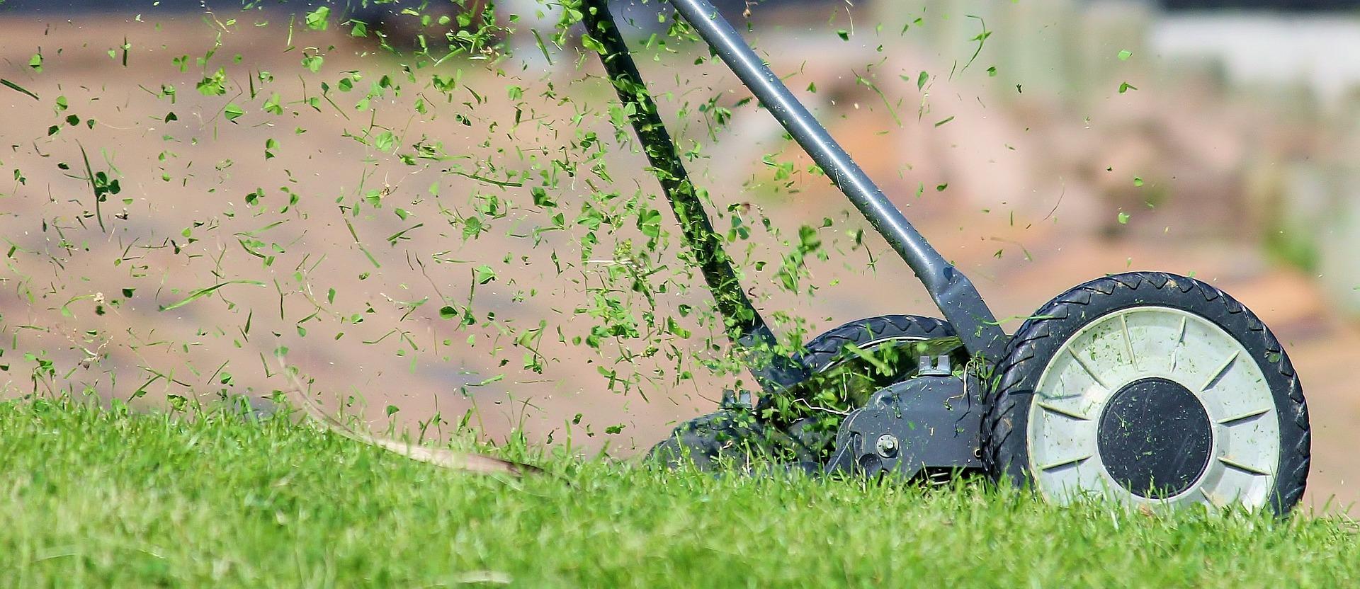 Que recèle une pelouse?