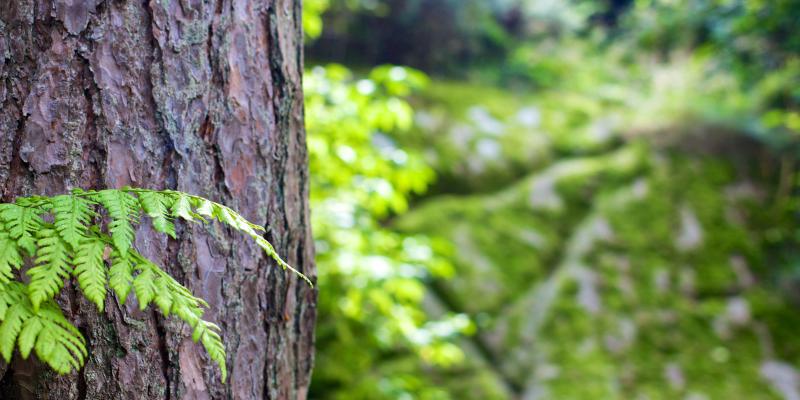 Le Canada encourage chacun à participer au Mois de l'inspection des arbres