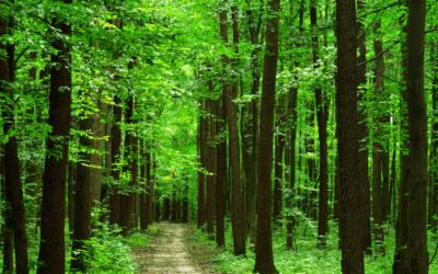 Protéger les forêts, c'est protéger l'humanité, la planète et la prospérité
