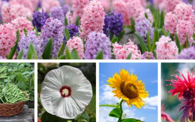 Annuelle, vivace, bulbe, légume et arbuste de l'année 2021